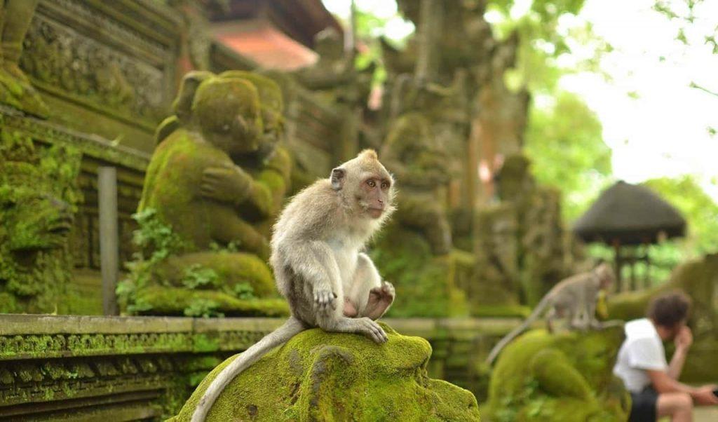 Убуд Бали лес обезьян